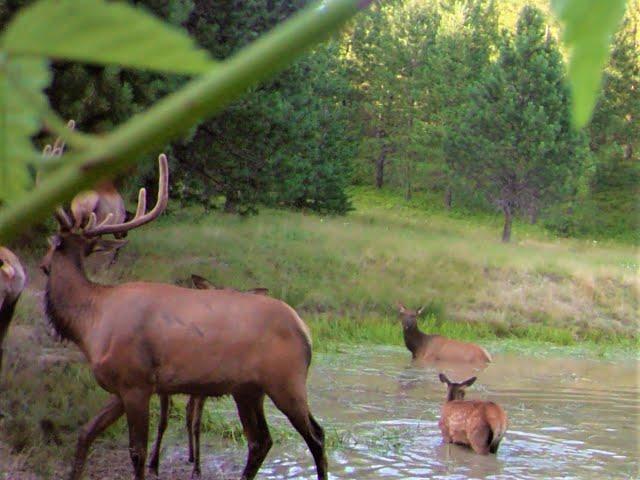 Elk River, Idaho...Setting up Trail Camera's