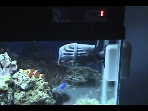 Part 1 my 29 gallon marine salt water aquarium coral reef for Saltwater fish tank lights