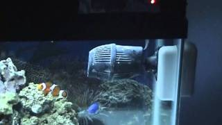 part 1 my 29 gallon marine salt water aquarium coral reef fish tank led lights saltwater