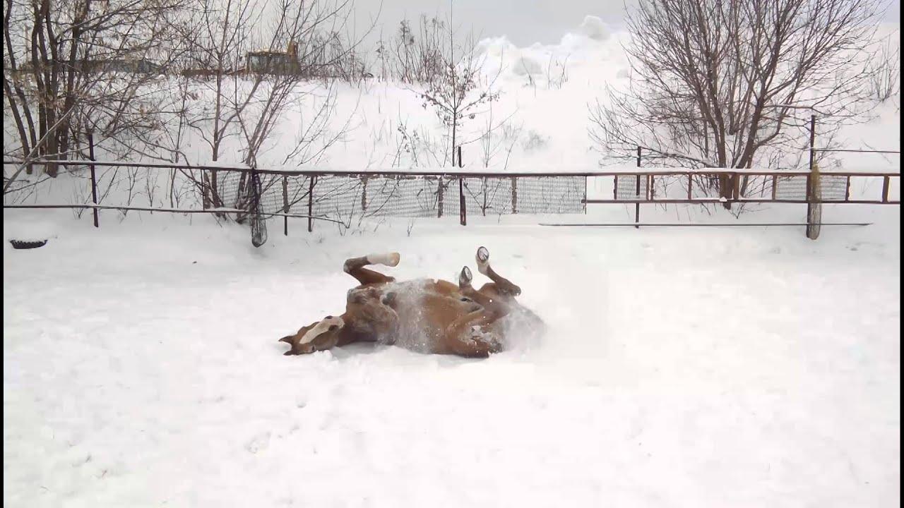 Купается в снегу