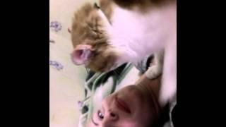 Смех да и только Кошка просит погладить