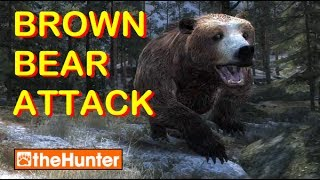 Brown Bear Attack and New Hurt Screen - theHunter PC Game