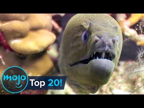 Top 20 Most Dangerous Ocean Creatures in the World