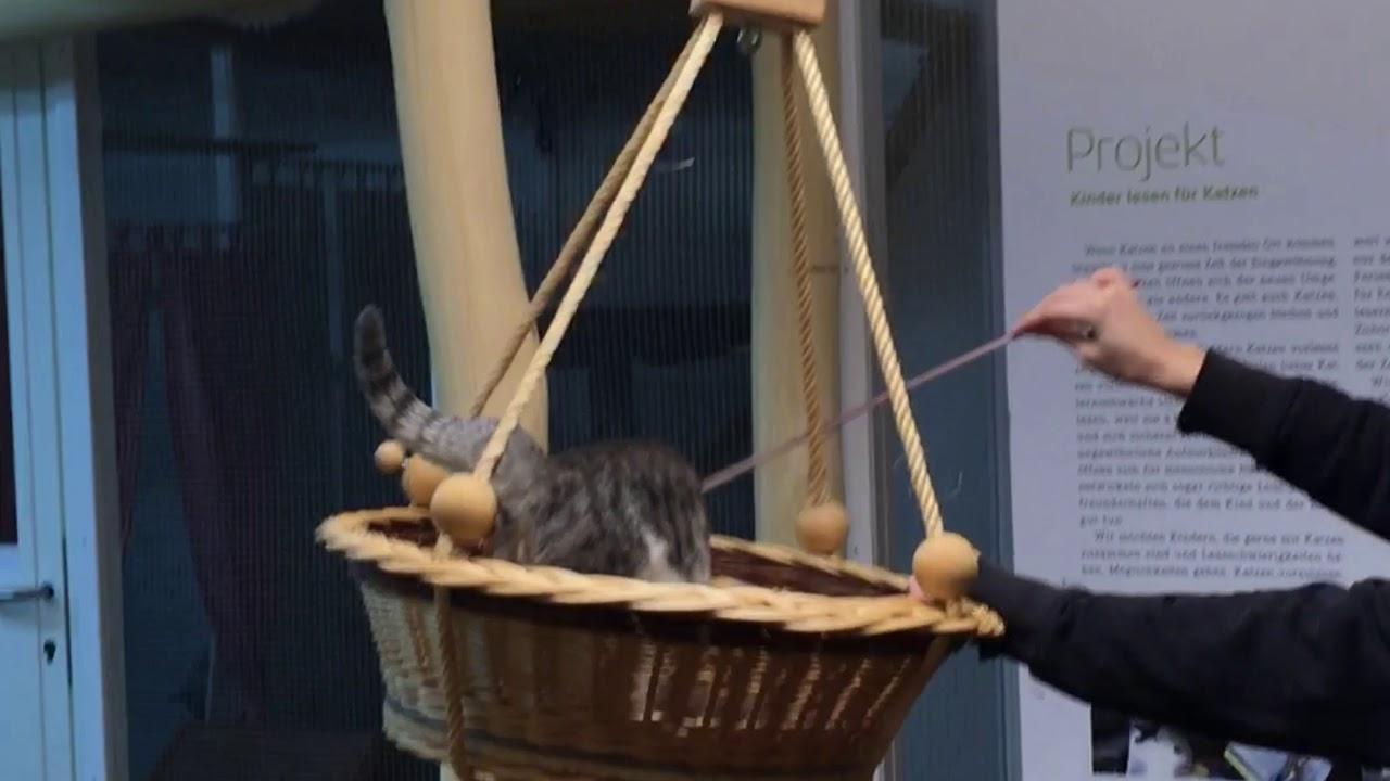 Katzenspass in der Tierpension