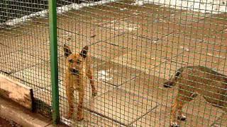 Psy do adopcji - Schronisko dla Bezdomnych Zwierząt w Jastrzębiu-Zdroju