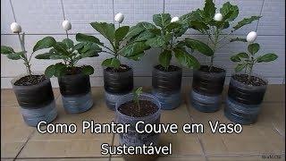 Como Plantar Couve em Vaso Auto Irrigável com Garrafa Pet