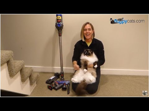 Dyson V8 Animal Cordless Stick Vacuum Cleaner Product Review Video - Floppycats