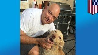 Найдена собака: хозяева нашли потерявшегося золотистого ретривера, 2 года скитавшегося в лесу