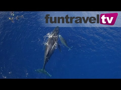 Swimming with whales in Ha'apai, Tonga