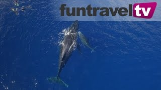 We go swimming with whales in Ha'apai, Tonga