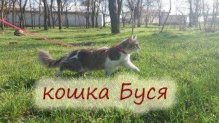 """""""КОШКА БУСЯ НА ПРОГУЛКЕ"""" выгуливаем нашу кошку"""