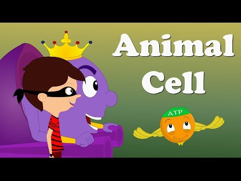 Animal Cell | #aumsum #kids #education #animals #animalcell