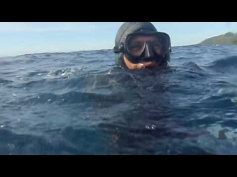 spearfishing cebu (sibonga)