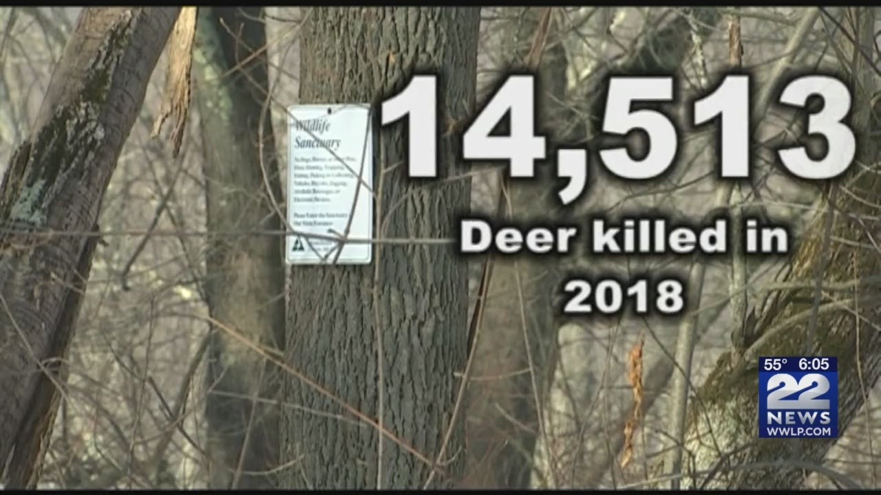 Massachusetts hunters set state record for most deer killed in 2018