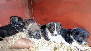 Бездомные щенки и их родители в опасности Новосибирск Ищем дом собакам и щенкам Спасите от отлова