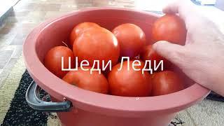 Мои томаты и их краткая характеристика