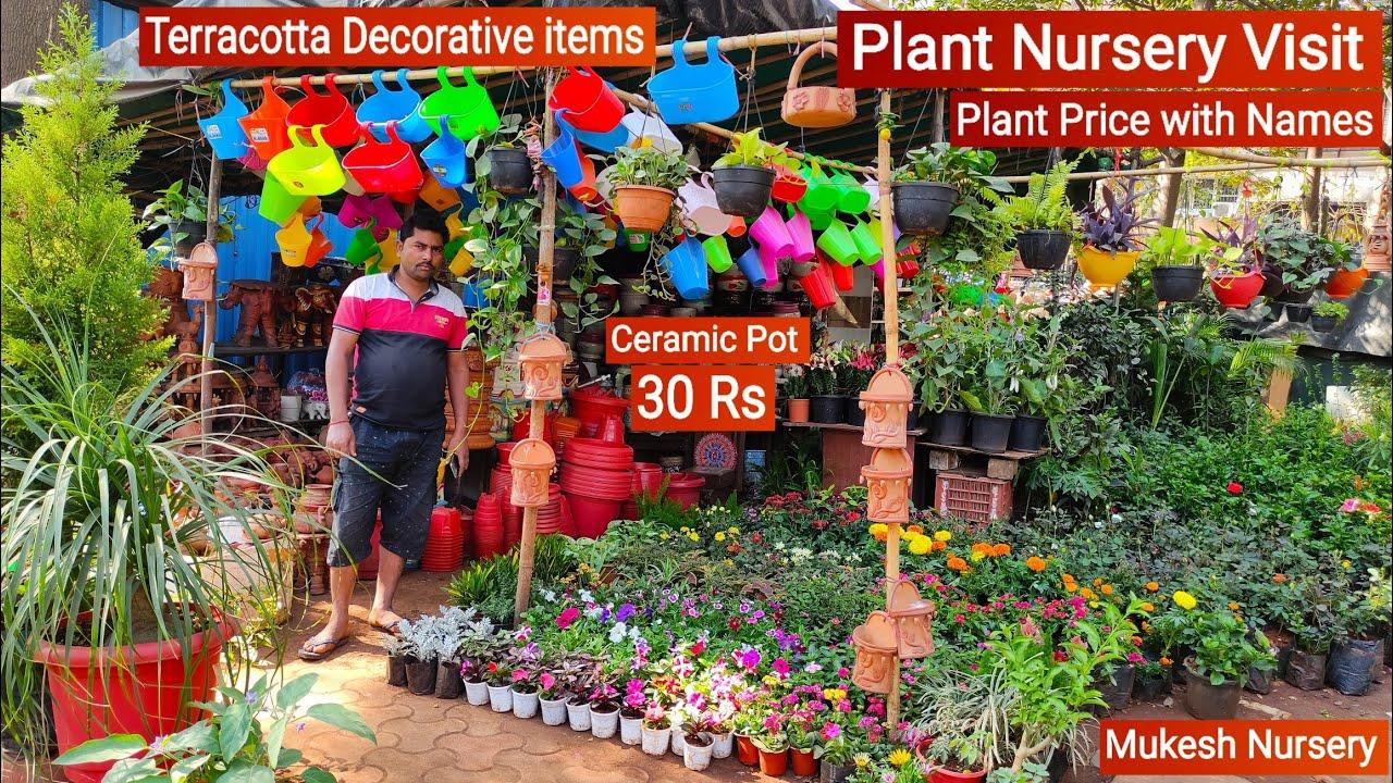 Plant Nursery Visit    Cheapest Plant Nursery    Plant Price with Names    Mukesh Nursery