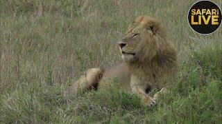 safariLIVE - Sunrise Safari - November 26, 2018