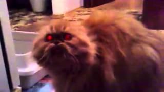 Кошка из ада