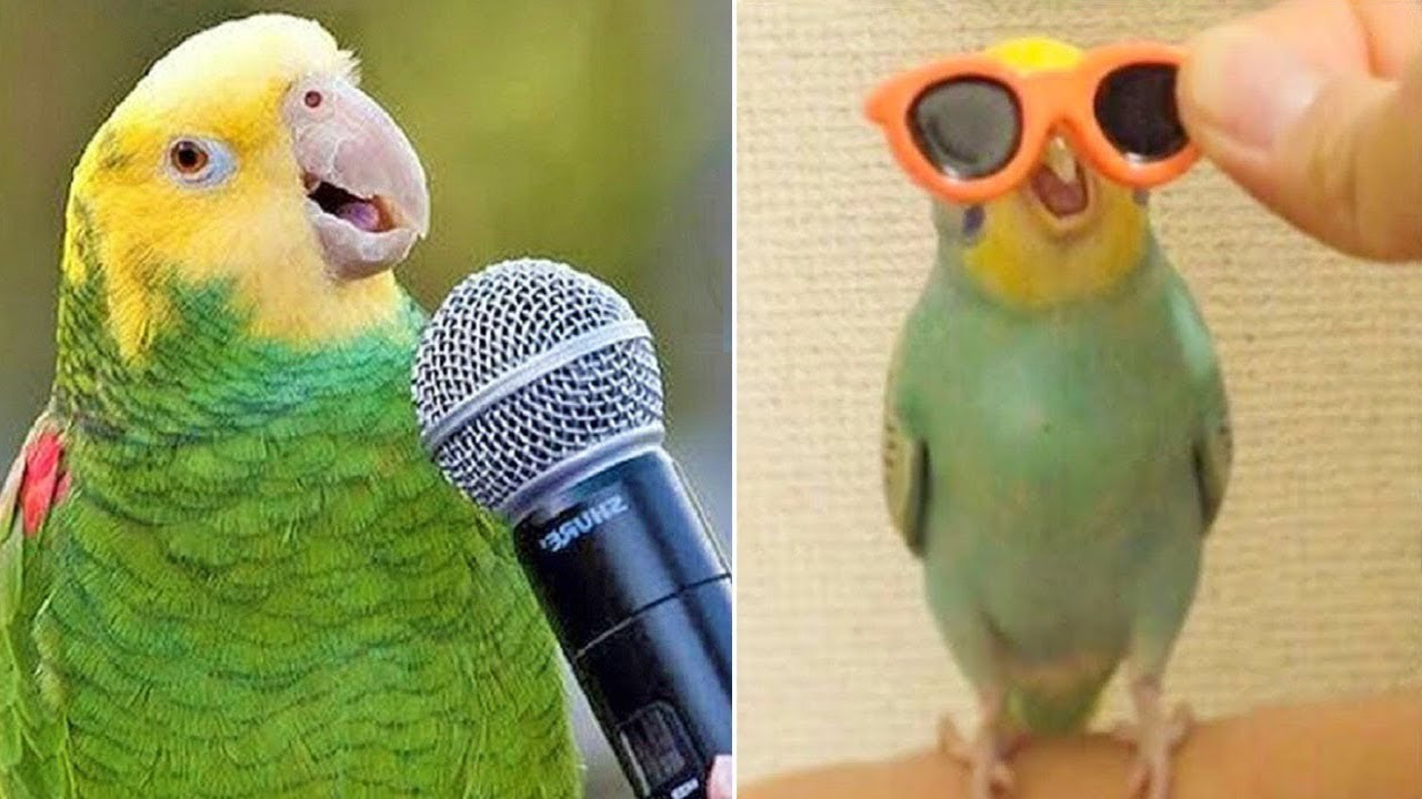 Baby Animals ? Funny Parrots and Cute Birds Compilation (2019) Loros Adorables Recopilación #5