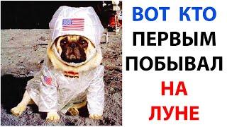 Мемы 2021 года. Подборка мемов с собаками. Мемасы про мопсов. Смешные и добрые мемчики октября