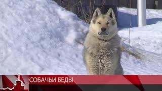 По следам бродячих собак Магадана