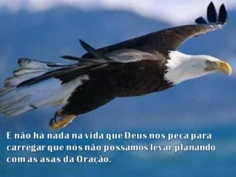 A Renovação Da águia A História Da águia Mensagem De