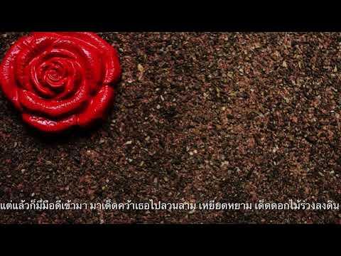 ดอกไม้สีแดงบนดินสีดำ เจ๊ก สุริยา  (OFFICIA L LYRIC)