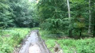 Waldweg mit Meerblick