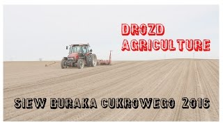 ㋡ Siew buraków 2016 ☆ Case JXU 95, Kverneland Vicon Unicorn 12 ☆ Drozd Agriculture ㋡