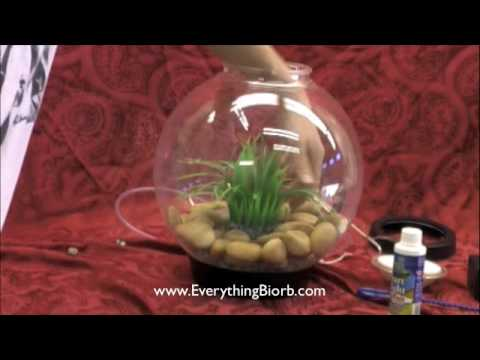 How To Set Up A Biorb Aquarium