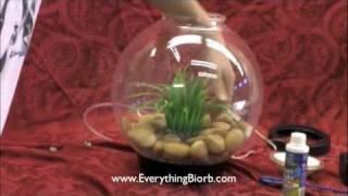 So richten Sie ein Biorb Aquarium