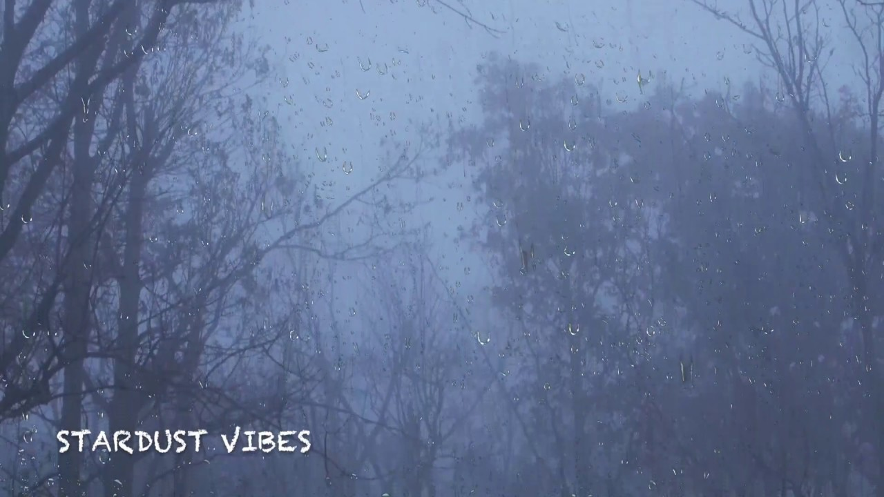 Rain & Thunder Sounds in the Foggy Forest