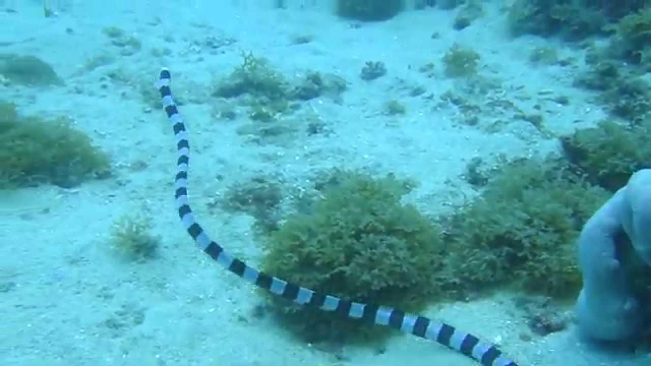 YouTube海鰻