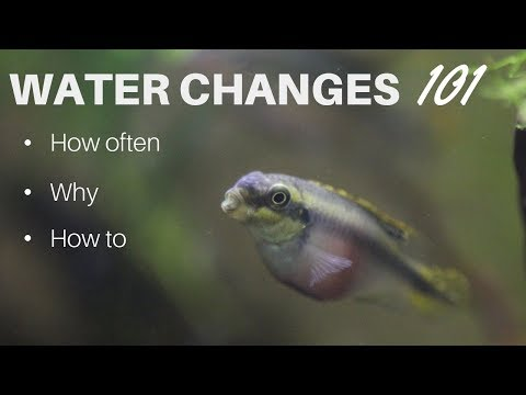 Water Changes: How Often, Why And How To