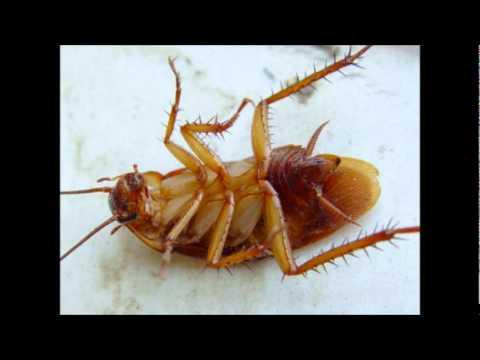 Отпетые мошенники - Тут таракан, там таракан