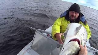 Рыбалка на семгу и сига сетями. Fishing for salmon.