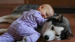Copiii si cainii Husky :D Dragoste mare :D