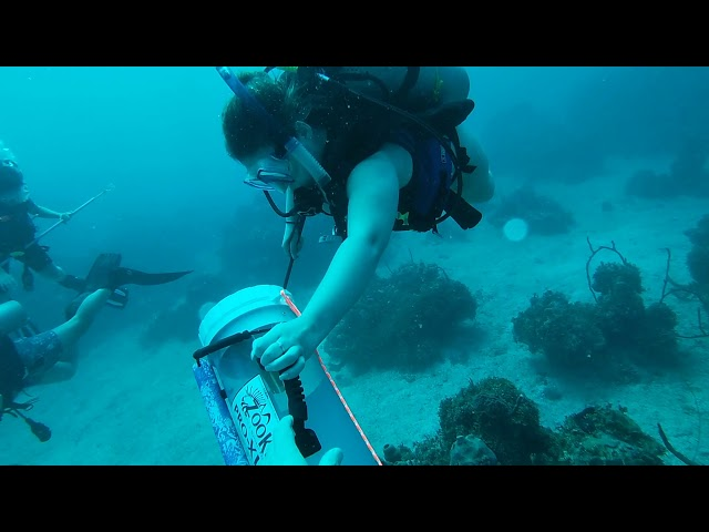 COME HUNT LIONFISH IN JAMAICA