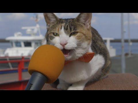 猫島で、猫100匹に聞きました! –Cat island (au WALLET Market PR)
