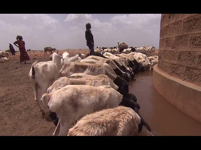 La pérdida de ganado crea una situación catastrófica en Kenia