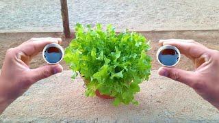 2 Tampinhas Que Faz Crescer Qualquer Planta