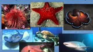 Океани планети Земля