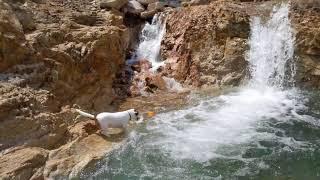 大雨の後、出現した天然プールで水遊び ボールに翻弄されるハル.