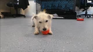 Dogs Trust Manchester - Alfie