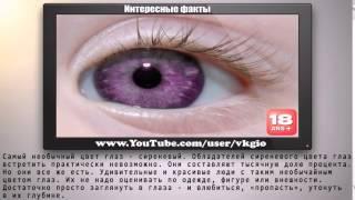 Самый необычный цвет глаз в мире   Интересные факты