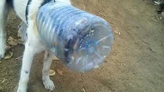 Голодные собаки