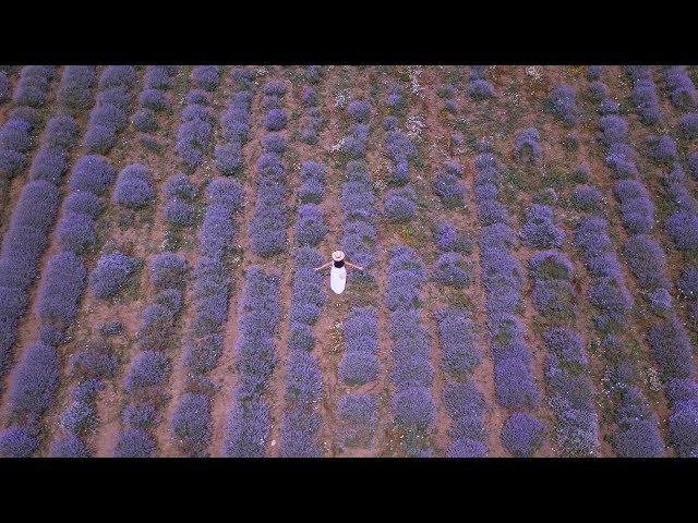 DJI MAVIC 2 PRO - CAPTURING NATURE'S BEAUTY [4K]