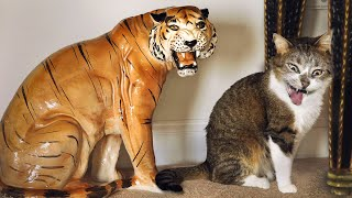 Funny Cats And Dogs Reactions   Try Not To Laugh