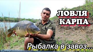 ЛОВЛЯ КАРПА Рыбалка в завоз